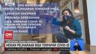 VIDEO: Hewan Peliharaan Bisa Terpapar Covid-19