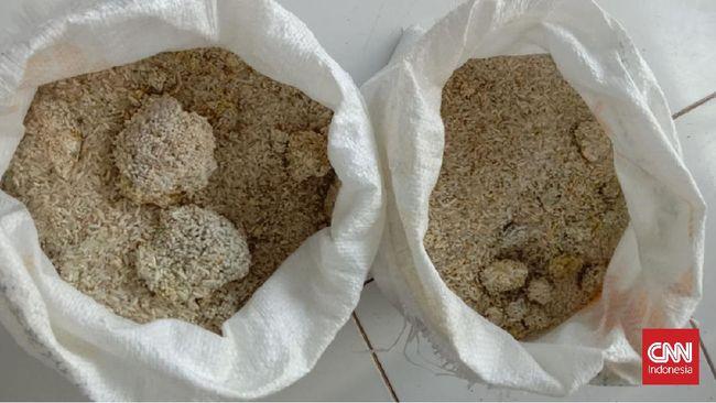 Saat karung dibuka, beras berbentuk bulat besar seperti batu kecoklatan. Lurah Pandeglang mengaku baru pertama kali melihat beras demikian buruk kualitasnya.