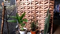 <p>Di bagian belakang, ada sudut mungil berisi koleksi tanaman hias Intan Nuraini. Meski sempit, area ini menambah nilai asri di rumah mereka. (Foto: YouTube INTAN NURAINI OFFICIAL)</p>