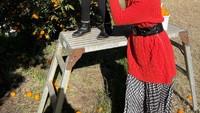 <p>Sesekali, Acha Septriasa dan suaminya juga mengajak putri mereka jalan-jalan. Seperti ketika pergi mengunjungi kebun buah dan mengajak sang putri memetik jeruk. (Foto: Instagram @septriasaacha)</p>