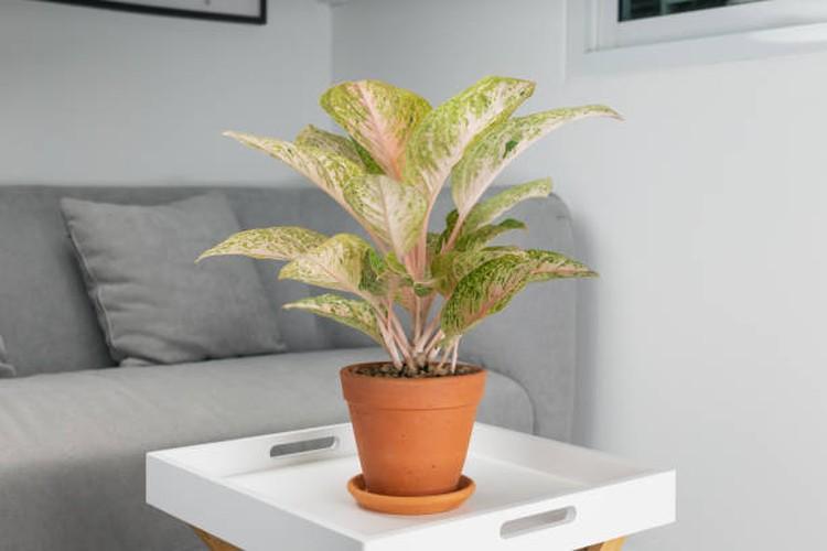 Beberapa tanaman hias dapat dijadikan sebagai pembersih udara, Bunda. Namun, jangan meletakkannya asal-asal, ya. Simak lima tips meletakkannya berikut ini, yuk.