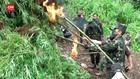 VIDEO: Ladang Ganja 2 Hektar Di Madina Dimusnahkan