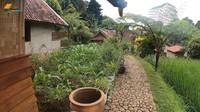 <p>Haji Usman Bimantara memiliki kebun untuk menanam tanaman di rumahnya, mulai dari jagung sampai pohon pisang. Kebun itu terletak bersebelahan dengan sawah. (Foto: YouTube Petualangan Alam Desaku)</p>