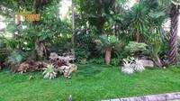 <p>Meski memiliki lahan yang luas, Ade dan keluarga tak melupakan penghijauan di area rumah, lho. Ia memiliki taman yang berisi tanaman hias dan pohon-pohon besar. (Foto: YouTube deHakims Story)</p>