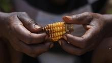 FAO Soroti 3 Miliar Orang Tak Mampu Makan, 2 Miliar Obesitas