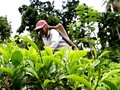 VIDEO: Industri Teh Sri Lanka Terancam Ambisi Non Pupuk Kimia