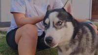 <p>Tak hanya soal olahraga dan otomotif, Leani juga kerap habiskan waktu bersama anjing jenis husky yang bernama Megi. Dalam beberapa potret, ia terlihat amat menyanyai hewan tersebut, Bunda.(Foto: Instagram @oktila_lr)</p>