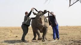 FOTO: Peternakan Badak di Afrika Selatan