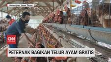 VIDEO: Peternak Bagikan Telur Ayam Gratis