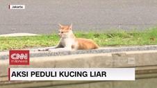 VIDEO: Merawat Kucing Kucing Liar