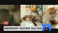 VIDEO: Merawat Kucing Sultan