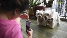 FOTO: Tingkah Gemas Influencer Anjing Peliharaan di Singapura
