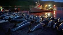 FOTO: Perburuan Lumba-lumba di Kepulauan Faroe