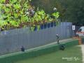 VIDEO: Pemandangan Hebat Rossi dan Fans di MotoGP San Marino