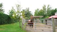 <p>Huniannya juga tak jauh dari rumah sang Paman dan Bibi. Di sana, mereka memelihara kuda, lho. (Foto: YouTube Sacha Stevenson)</p>