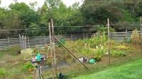 <p>Sacha juga menunjukkan kebun pribadi milik kakeknya. Saat ini, kebun tomat hingga jagung tersebut dirawat sang Bibi. (Foto: YouTube Sacha Stevenson)</p>