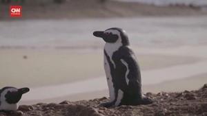 VIDEO: Ganas, Lebah Sengat 63 Pinguin Hingga Tewas