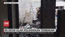 VIDEO: 80 Ular Peliharaan Terbakar