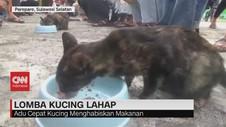 VIDEO: Lomba Kucing Lahap di Parepare