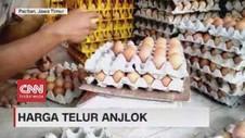 VIDEO: Harga Telur Ayam Anjlok