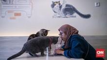 FOTO: Kencan Bareng Kucing di Kafe Kala PPKM Diperlonggar