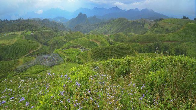 Kawasan Malino Highlands di Kabupaten Gowa, Sulawesi Selatan, rasanya wajib dikunjungi bagi wisatawan penikmat teh.