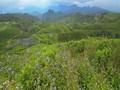 Menyeruput Teh di Tengah Keteduhan Malino Highlands