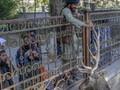 Taliban 'Pamer' Hukuman Gantung Jasad Pencuri ke Publik
