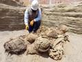 VIDEO: Fosil Manusia Usia 800 Tahun Ditemukan di Peru