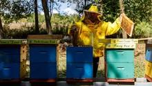 FOTO: Mengintip 'Hotel Lebah' di Kroasia