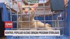 VIDEO: Kontrol Populasi Kucing Dengan Program Sterilisasi