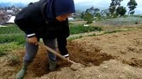 <p>Ia bahkan mengurus lahan dan menyangkul tanah secara langsung untuk ditanami daun bawang, Bunda. (Foto: YT Novi Listiana)</p>