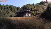 <p>Karena sudah lama tak ditempati, rumah tersebut sudah dipenuhi oleh tanaman rambat dan ilalang. Mereka akan merenovasi rumah tersebut agar layak dihuni kembali. (Foto: YouTube Daily Tika Weixun di China.)</p>