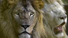 FOTO: Semarak Satwa di Taman Safari Serambi Mekkah