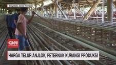 VIDEO: Harga Telur Anjlok, Peternak Kurangi Produksi