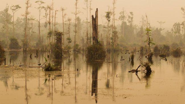 Perusahaan perusak hutan lindung lepas tangan dan tak kunjung membayar denda pembakaran lahan gambut, LSM minta MA ambil alih lewat petisi online.