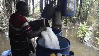 FOTO: Membuat Sapele, Tuak Tradisional Nigeria