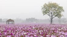 5 Taman di Korea Selatan yang Berwarna-warni saat Musim Gugur