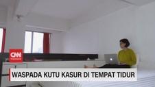 VIDEO: Waspada Kutu Kasur di Tempat Tidur