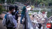 FOTO: Taman Margasatwa Ragunan Kembali di Buka