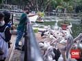 Taman Margasatwa Ragunan Buka Lagi, 4.901 Orang Berkunjung