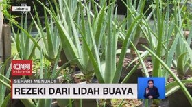 VIDEO: Sehari Menjadi Pembudidaya Lidah Buaya