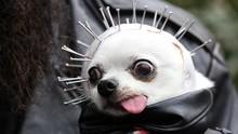 FOTO: Parade Anjing Berebut Gelar Kostum Halloween Terbaik